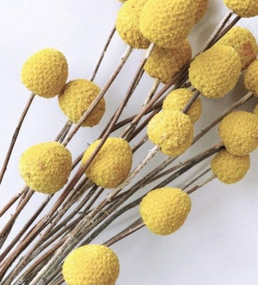 Natural Billy Buttons