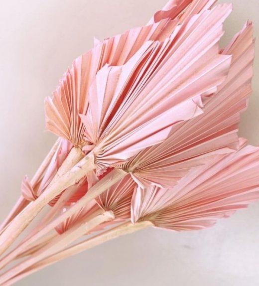 Pink Spear Palm