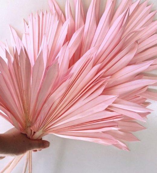 Pink Sun Cut Palms