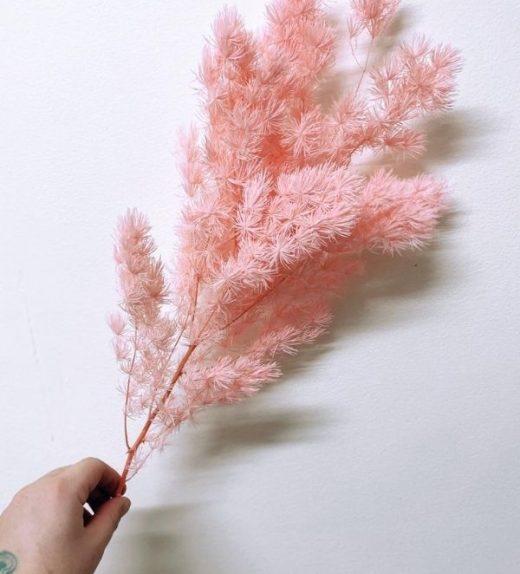Ming Fern - Pink (1)