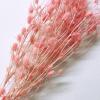 Pink Sea Holly (1)