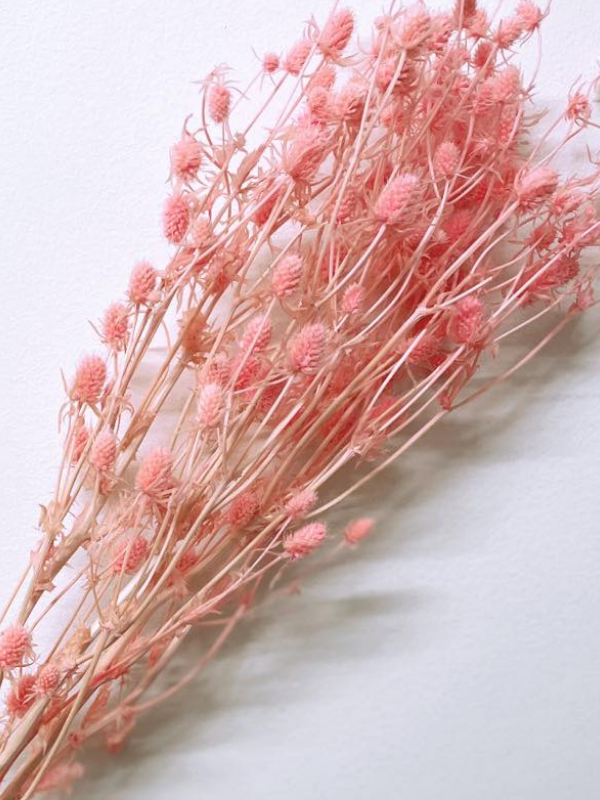 Pink Sea Holly