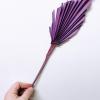 Purple Spear Pal,