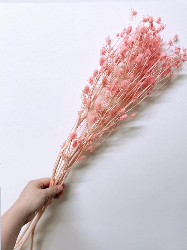 Pink Sea Holly (3)