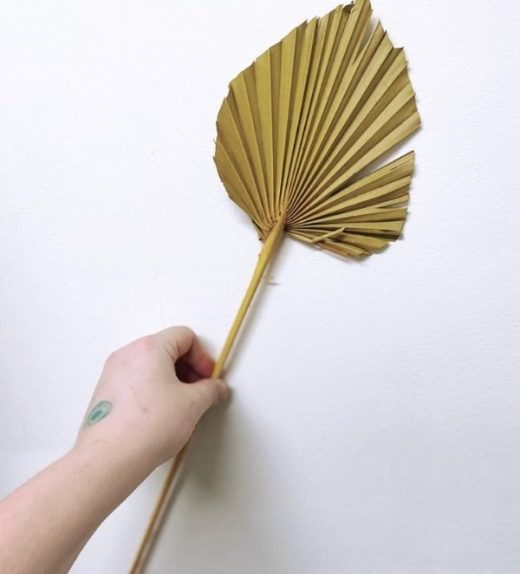 palm spear mustard