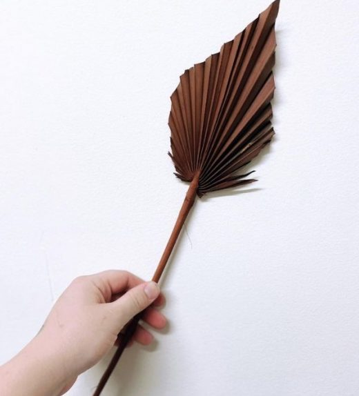 spear palm - brown
