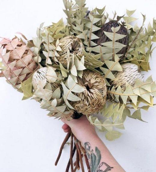 Baxteri Banksia (2)