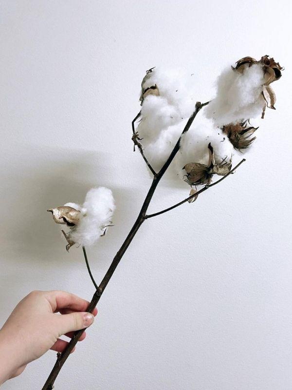 Cotton - Australian Grown